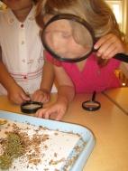 Ariadne Examines Seeds