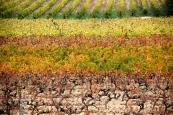 Vignes ~ Menerbes